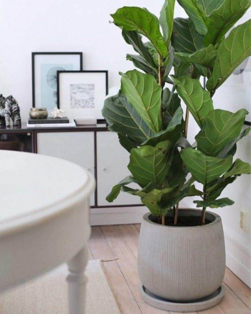 Piante da Appartamento - Le Mie 7 Preferite ⋆ Debora