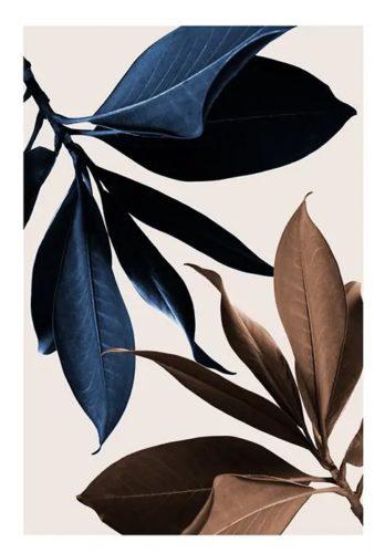 Blue Magnolia No1 (50x70)